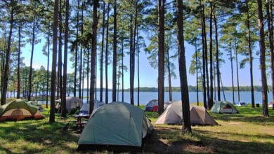 Photo of 19 Fun Activities to do when Camping