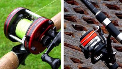 Photo of Difference Between Casting and Spinning Rods