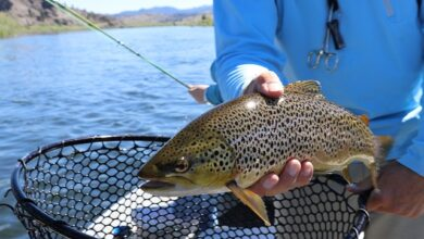 Photo of How To Fish For Trout – Full Guide