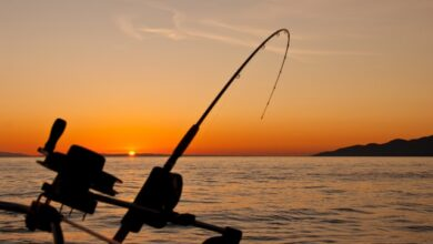 Photo of Best Time To Go Saltwater Fishing