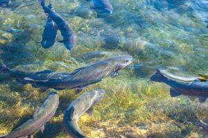 trout habitat