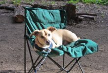 Photo of 10 Tips For Camping With A Puppy