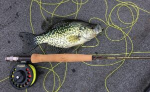 crappie and rod
