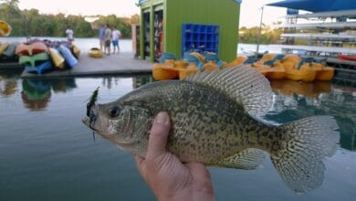 Photo of Fishing For Crappie – The Ultimate Guide