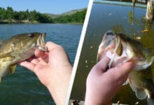 Photo of Smallmouth vs Largemouth Bass: Everything You Need To Know