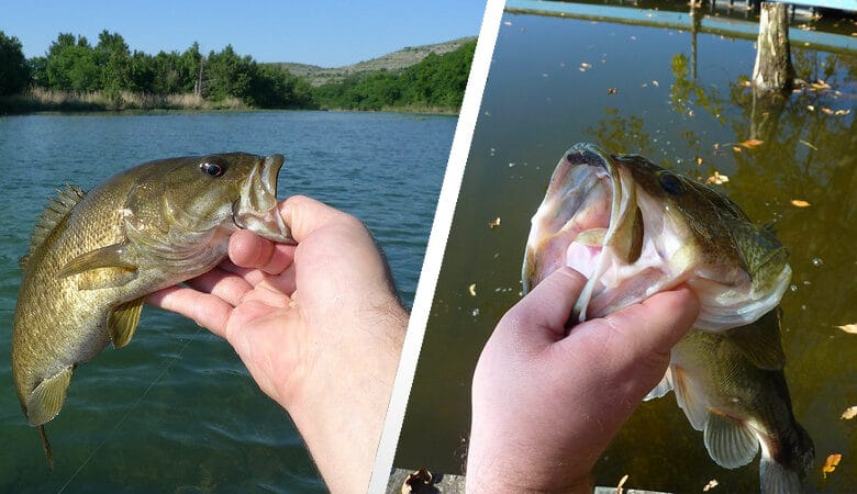 largemouth vs smallmouth bass